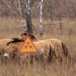 Belastung Tschernobyl