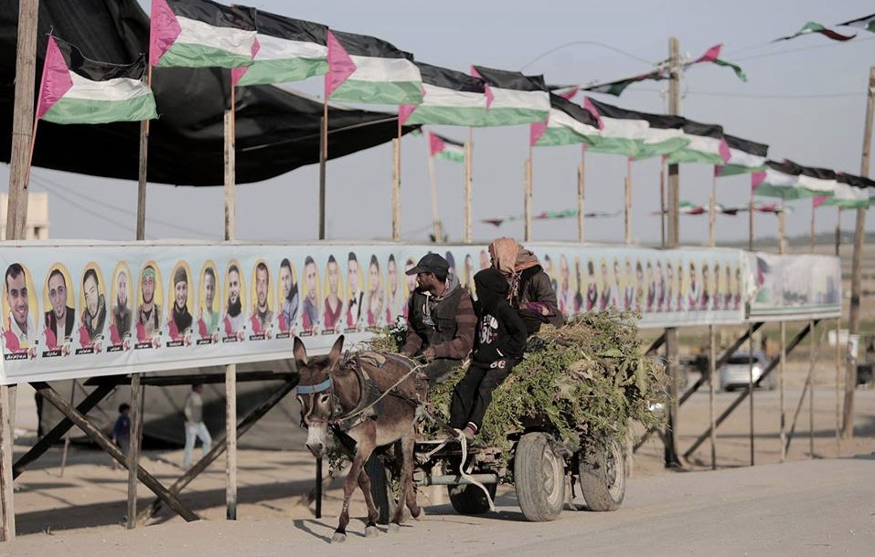 Row of killed in Gaza (qudsn)