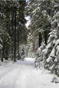 zimyj les